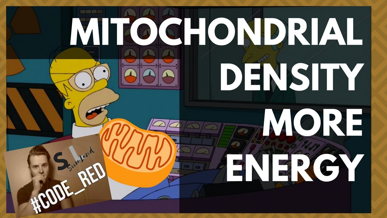Mitochondrial Density For More Efficient Fat Burning, WHATCHA Talkin Bout!