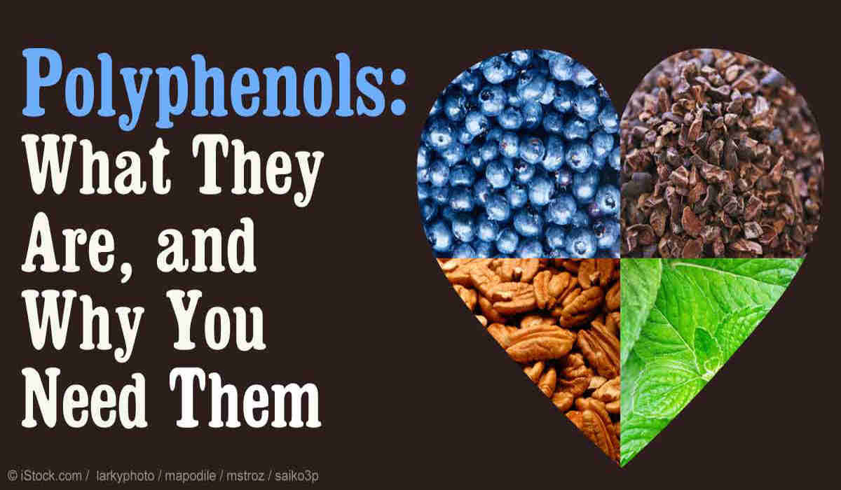 Polyphenols – What They Are, and Why You Need Them
